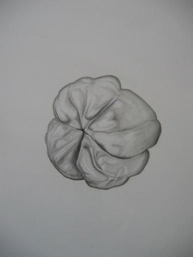 green-pepper-drawing