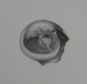 shell-drawing